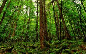 Visos miško paslaugos