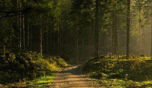 Perkame mišką